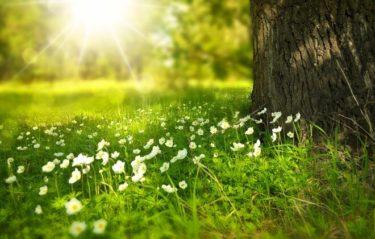 Le cycle des saisons – 季節の移り変わり